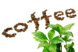 grøn kaffe til vægttab