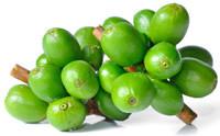 grønne kaffebønner vægttab