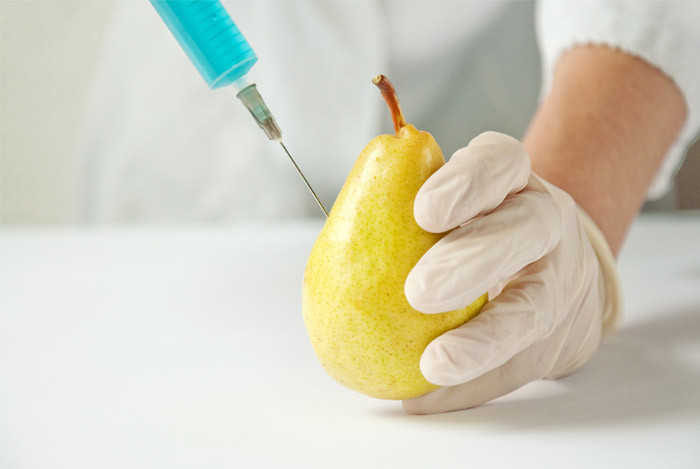 GMO-pear-neddle