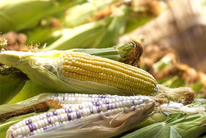 corn-various