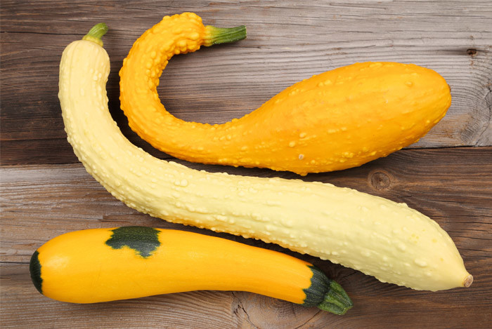 squash-zucchini