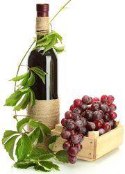 vin og druer