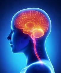 hjernefunktion