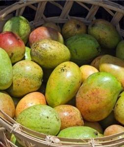 afrikansk mango kosttilskud