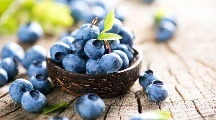 friske vilde ægte blåbær
