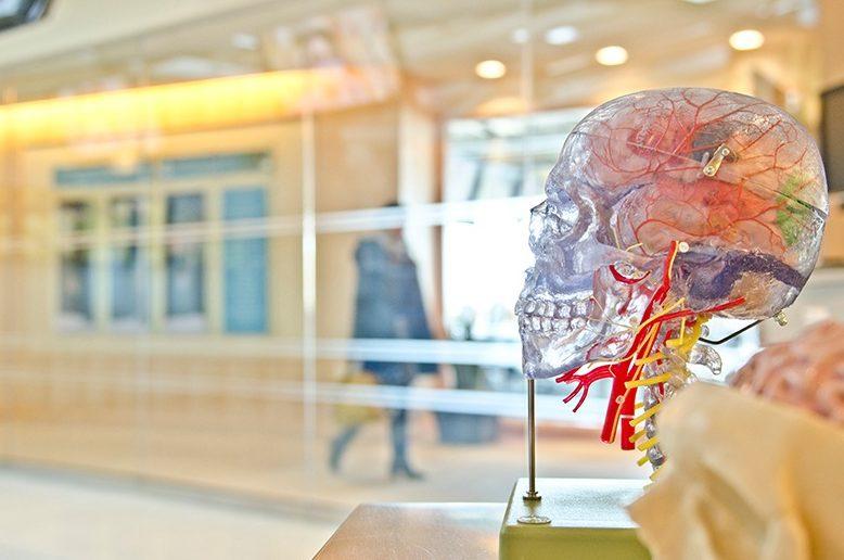 bedre hjerne med kreatinpulver